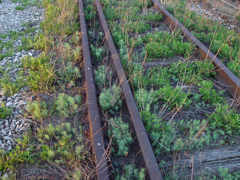an ecology lesson between the rails and ties