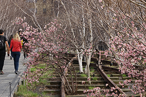 the High Line Gansevoort                             Woodlands April 2015